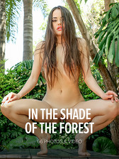 In The Shade Of The Forest